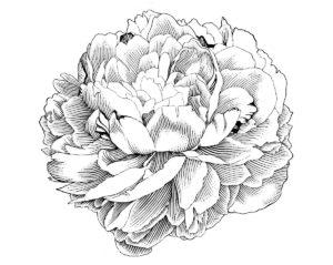 Значение татуировки пион